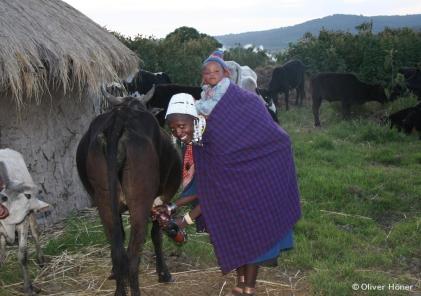 Femme massaï trayant une vache