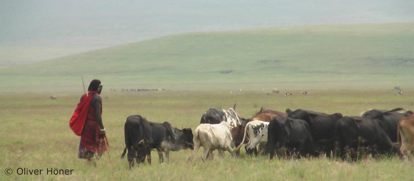 Repenser les conflits humain-prédateur dans leNgorongoro